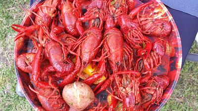 Beautiful, boiled crawfish