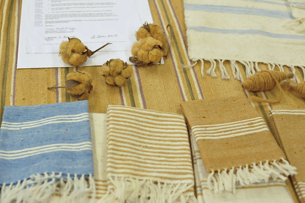 Samples of small textiles made with Acadian brown cotton and small bolls of brown cotton
